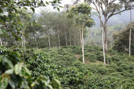 Plantation - Las tolas- Pichincha